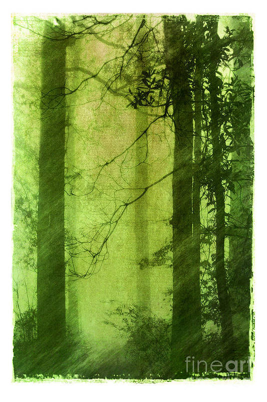 Green Print featuring the photograph Mystical Glade by Judi Bagwell