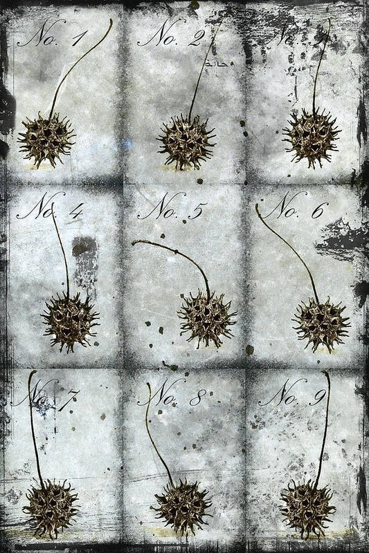 Nine Print featuring the photograph Nine Seed Pods by Carol Leigh