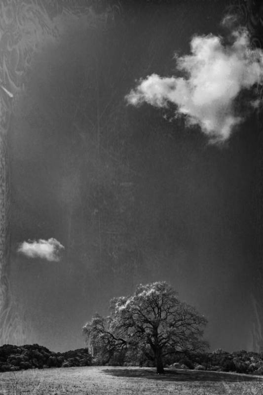 Oak Tree Print featuring the photograph Places We Remember by Laurie Search