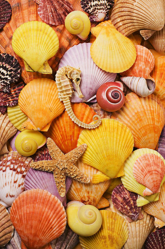 Sea Shells Starfish Print featuring the photograph Sea Horse Starfish And Seashells by Garry Gay