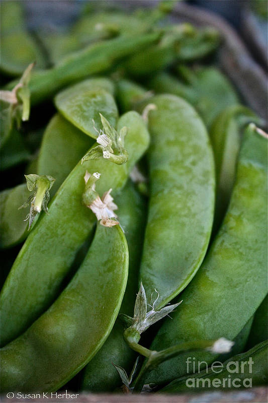 Food Print featuring the photograph Snap Peas Please by Susan Herber