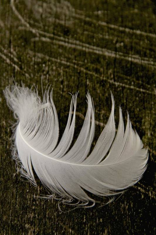 Feather Print featuring the photograph Soft Curve One by Odd Jeppesen