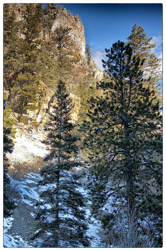 Mountain Print featuring the photograph Tall Trees by Lisa Spencer