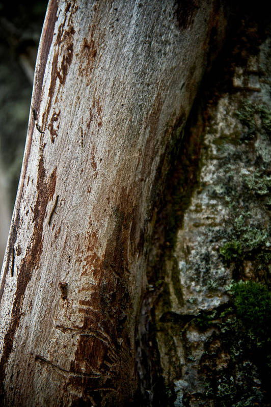 Trees Print featuring the photograph The Rough And The Smooth by Odd Jeppesen