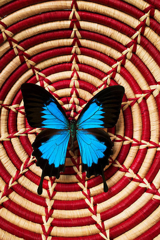 Butterfly Print featuring the photograph Blue Black Butterfly In Basket by Garry Gay