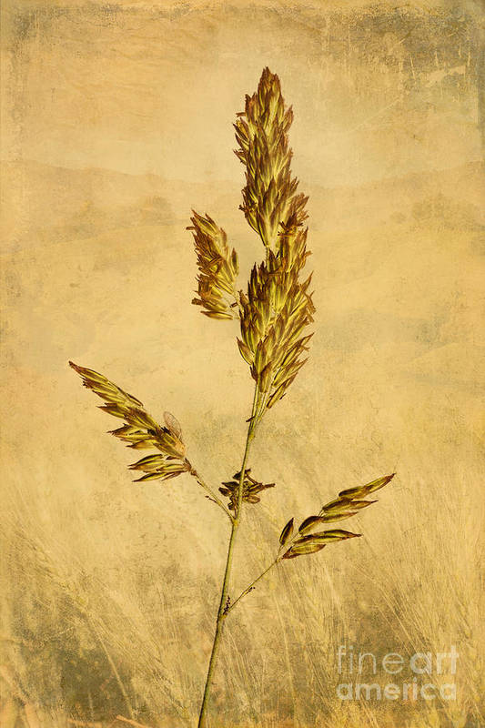 Nature Print featuring the photograph Meadow Grass by John Edwards
