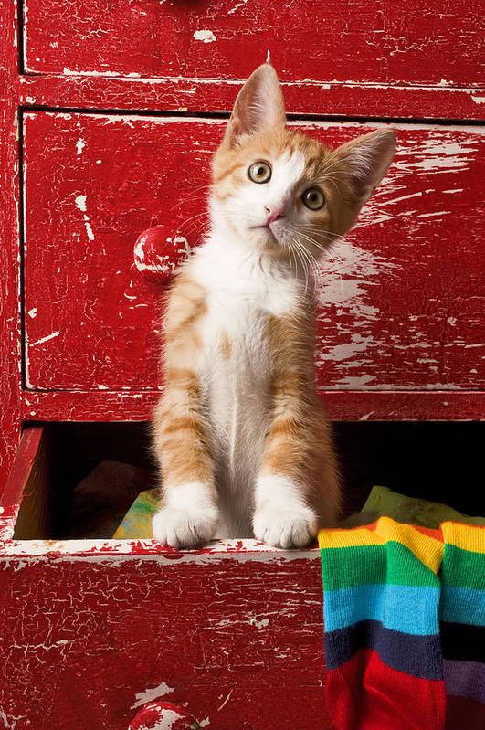 Kitten Print featuring the photograph Orange Tabby Kitten In Red Drawer by Garry Gay