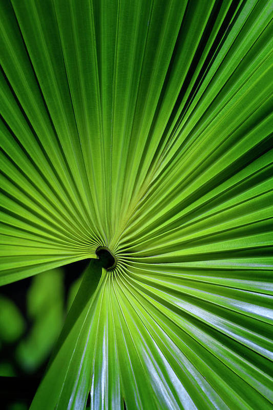 Bosky Print featuring the photograph Palmgreen by Al Hurley