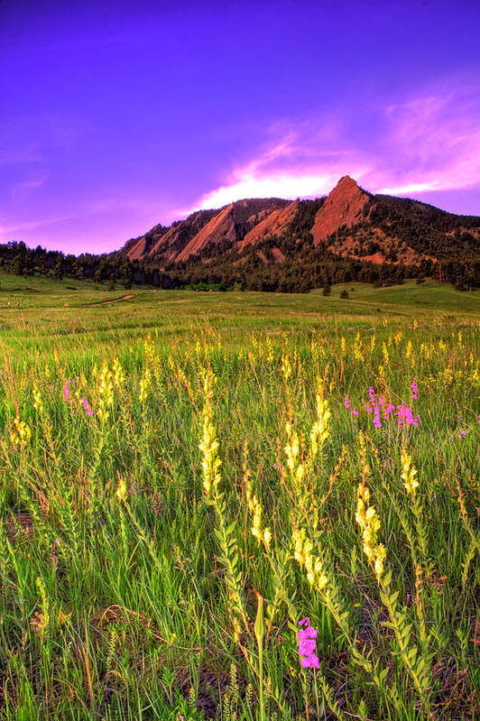 Colorado Print featuring the photograph Purple Skies And Wildflowers by Scott Mahon