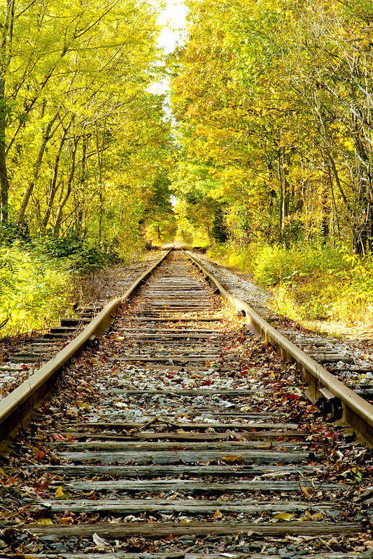 Foliage Print featuring the photograph Track To Nowhere by Greg Fortier