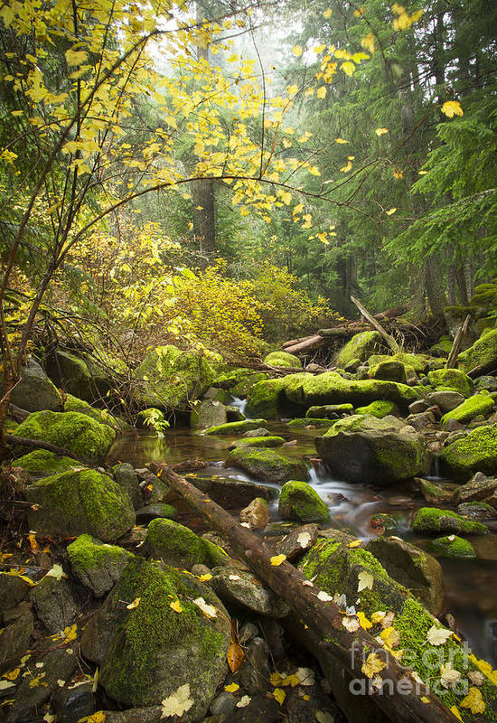 Beauty Creek Print featuring the photograph Beauty Creek by Idaho Scenic Images Linda Lantzy