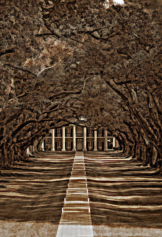 Oak Alley Plantation Print featuring the photograph Oak Alley Bw by Steve Harrington