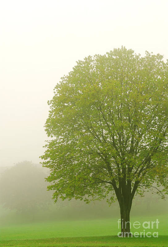 Fog Print featuring the photograph Tree In Fog by Elena Elisseeva