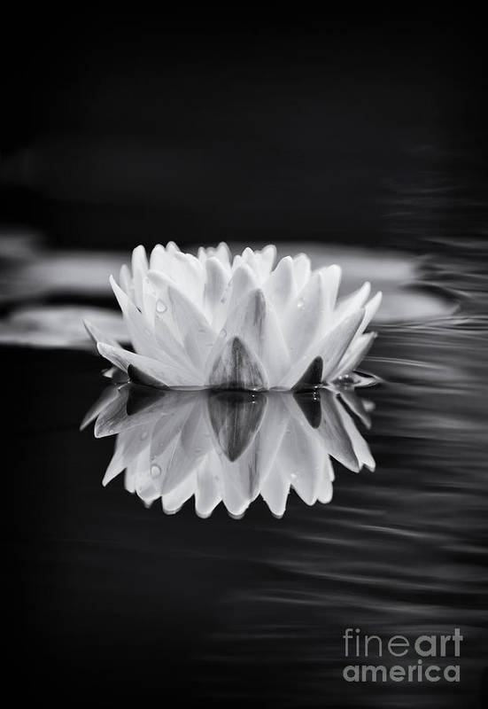 Nymphaea Print featuring the photograph Water Lily Reflection by Tim Gainey