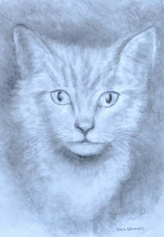 Pencil Drawing Print featuring the drawing The Kitten by Jack Skinner
