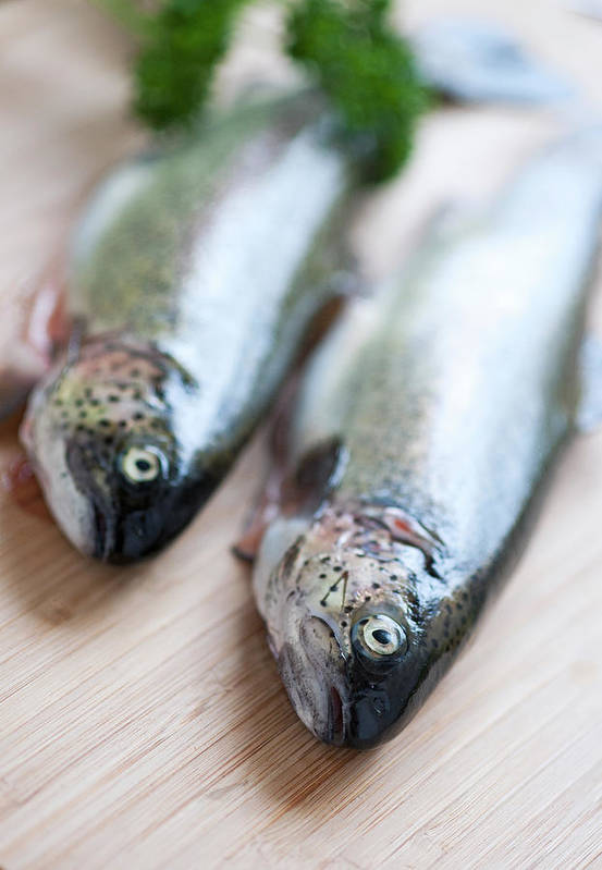 Vertical Print featuring the photograph Trouts by Carlo A