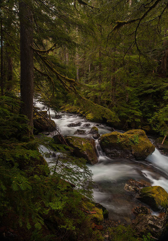 Northwest Print featuring the photograph A River Passes Through by Mike Reid