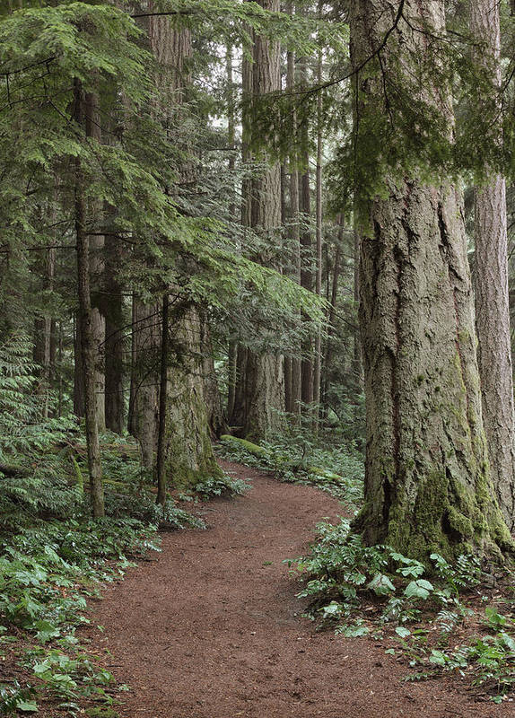 Forest Print featuring the photograph Heritage Forest by Randy Hall