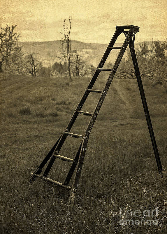 Ladder Print featuring the photograph Orchard Ladder by Edward Fielding