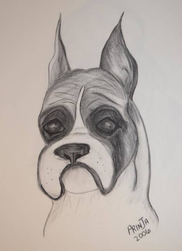 Breed Print featuring the drawing Boxer by Maria Urso