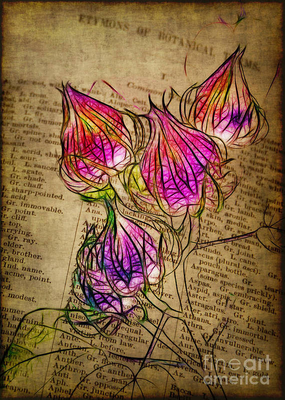 Seedpods Print featuring the photograph Faerie Caps by Judi Bagwell