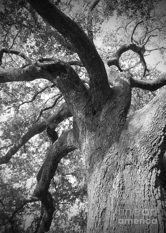 New Orleans Print featuring the photograph Live Oak by Waverley Dixon