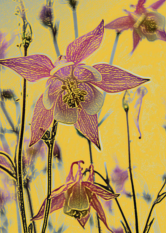 Columbine Print featuring the photograph Columbine by Michael Peychich