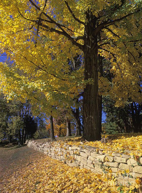 Autumn Print featuring the photograph Autumn Wall - Fm000082 by Daniel Dempster