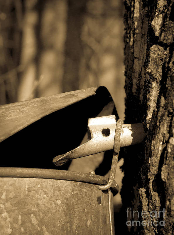Tapping Print featuring the photograph Closeup Of A Maple Tap by Edward Fielding