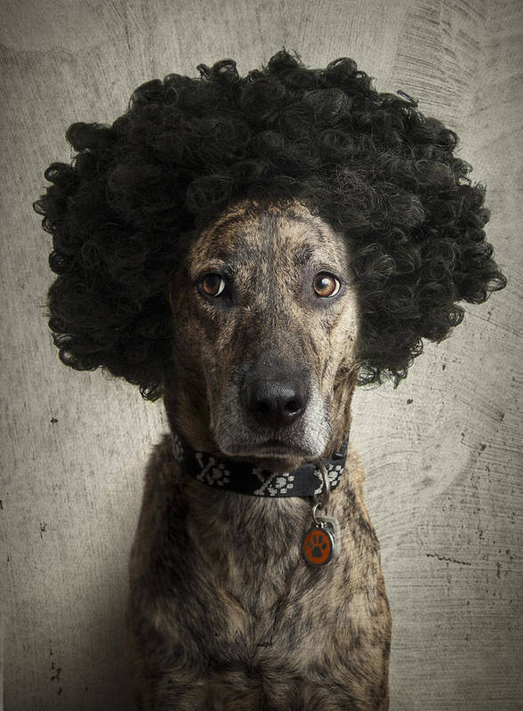 Canine Print featuring the photograph Dog With A Crazy Hairdo by Chad Latta
