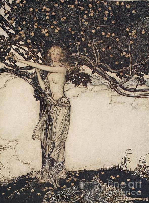 Der Ring Des Nibelungen; The Ring Of The Nibelung; Myth; Legend; Opera; The Ring Cycle; Das Rheingold; Richard Wagner; Viking; Norse Mythology; Female; Goddess; Keeper; Apples; Fruit; Tree; Cat; Cats; Basket; Fruit Picking; Fantasy; Freya; Nude Print featuring the drawing Freia The Fair One Illustration From The Rhinegold And The Valkyrie by Arthur Rackham