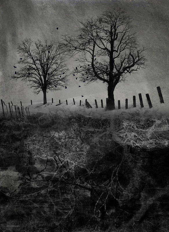 Trees Print featuring the digital art Dark Roost by Ron Jones