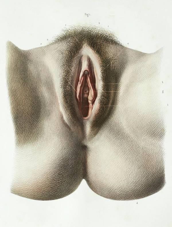 Scientific picture of a female anus