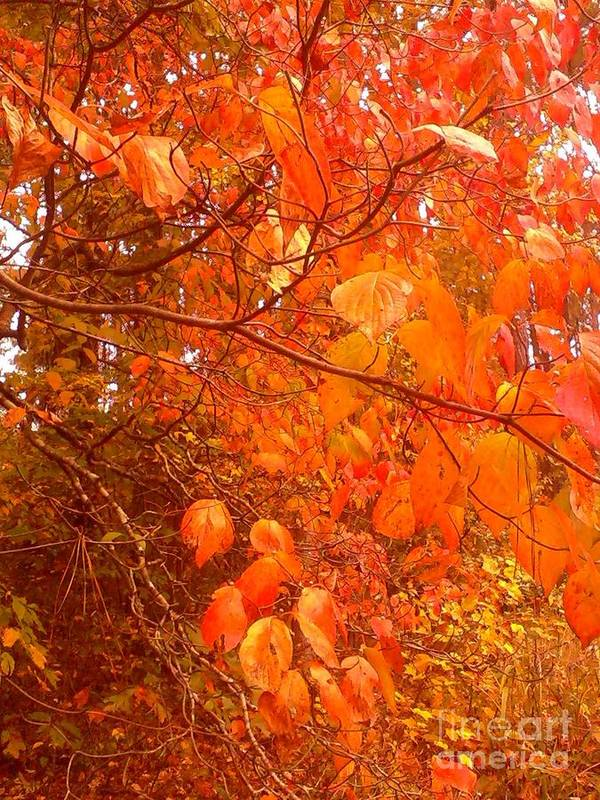 Fall Print featuring the photograph Ablaze by Elizabeth Carr