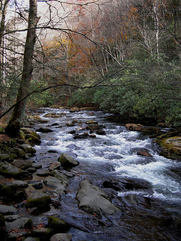 Mountain Stream Print featuring the photograph Fall Seclusion by Skip Willits