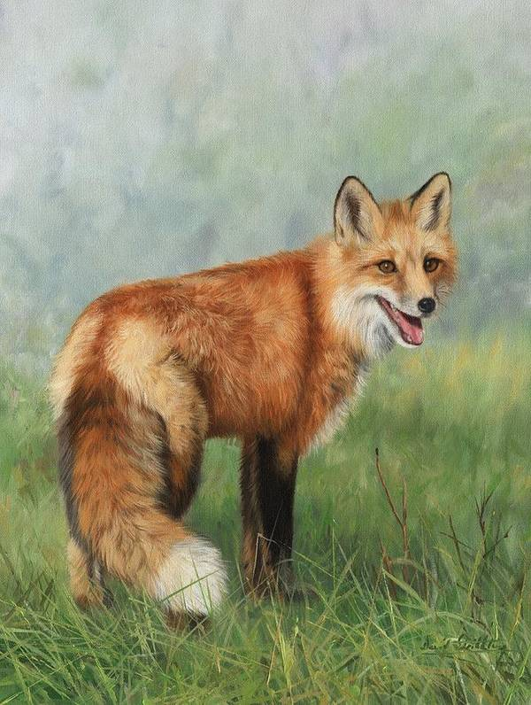 Fox Print featuring the painting Fox by David Stribbling