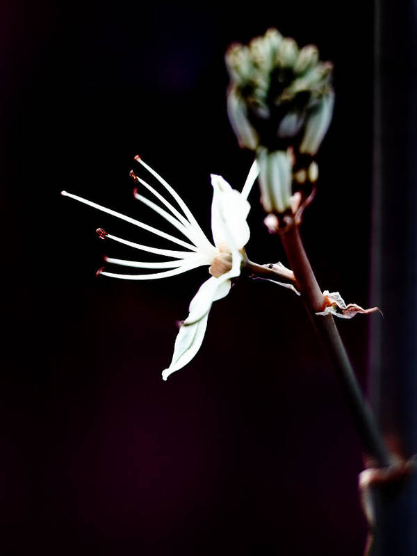 Beautiful Print featuring the photograph infrared Asphodel by Stelios Kleanthous
