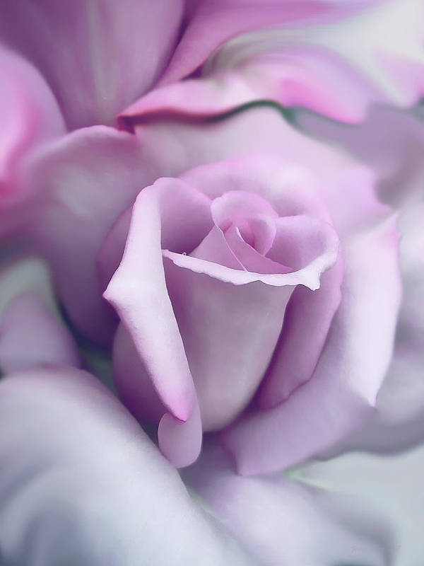 Rose Print featuring the photograph Lavender Rose Flower Portrait by Jennie Marie Schell