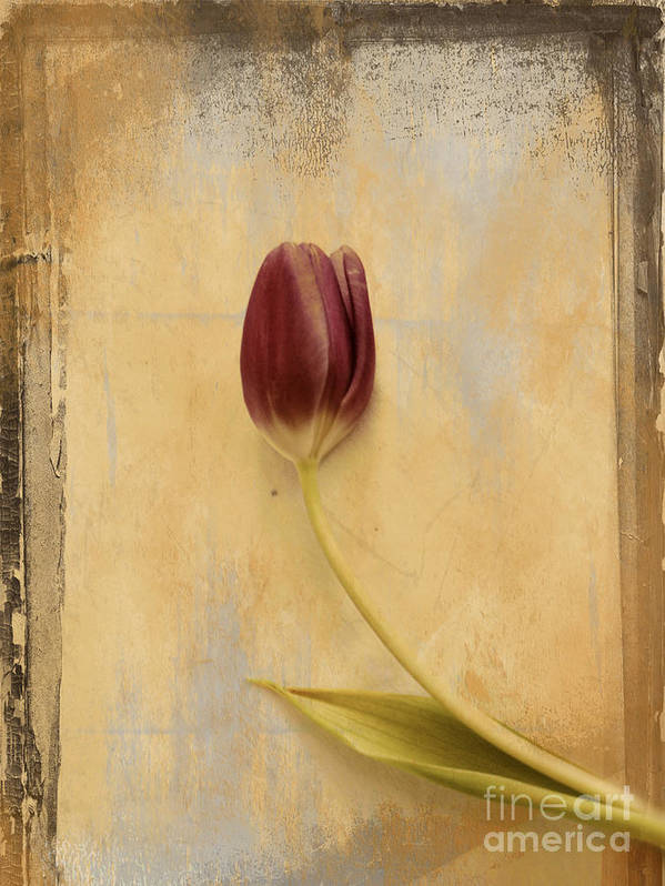 Tulip Print featuring the photograph Penchant Naturel 03bt03c by Variance Collections