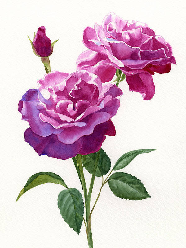 Red Print featuring the painting Red Violet Roses With Bud On White by Sharon Freeman