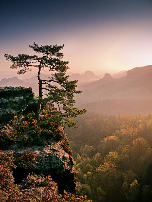 Vertical Print featuring the photograph Tree In Morning Llght In Saxon Switzerland by Andreas Wonisch