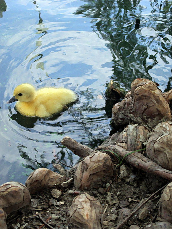 Duck Print featuring the photograph Little Ducky by Angelina Vick
