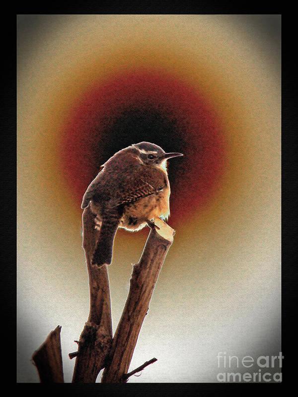 Wren Print featuring the photograph Wren At Sundown by Sue Melvin