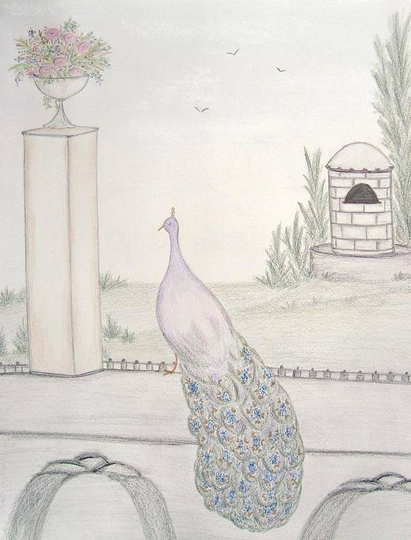 Peacock Print featuring the drawing Peacock In An Italian Landscape by Christine Corretti