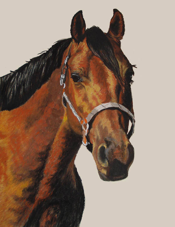 American Quarter Horse Print featuring the pastel Quarter Horse by Ann Marie Chaffin