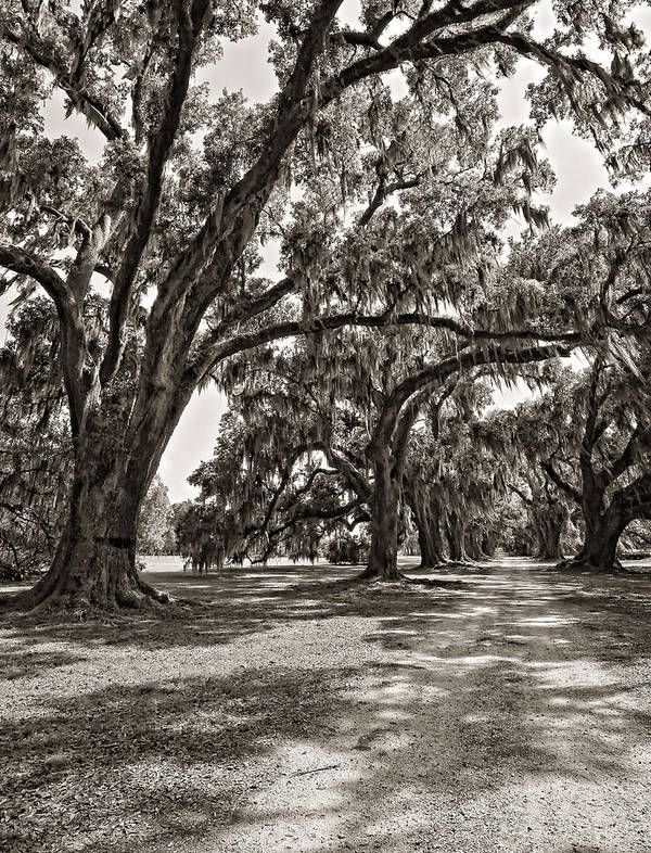 Evergreen Plantation Print featuring the photograph Memory Lane Monochrome by Steve Harrington