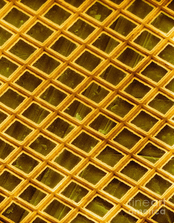 Scanning Electron Micrograph Print featuring the photograph Gold Electron Micrograph Grid by David M. Phillips