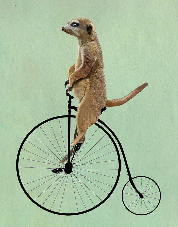 Meerkat Framed Prints Print featuring the digital art Meerkat On A Black Penny Farthing by Kelly McLaughlan