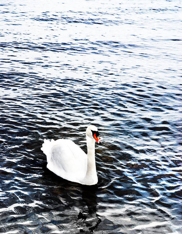 Swan Print featuring the photograph Swan by Mark Rogan