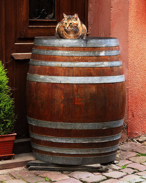 Cat Print featuring the photograph Cat Guarding A Wine Barrel In Alsace by Greg Matchick